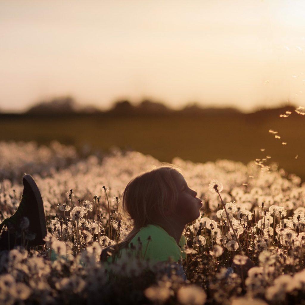 Kind blaast paardebloemen in een veld