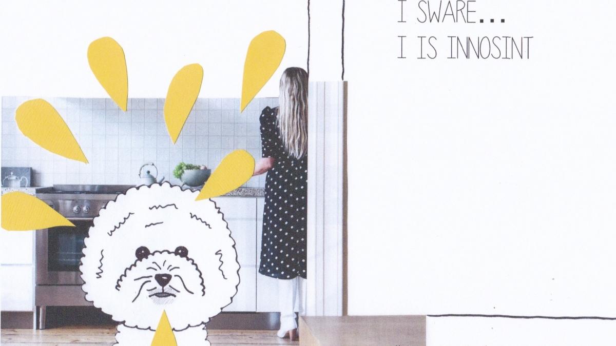 collage plassende hond